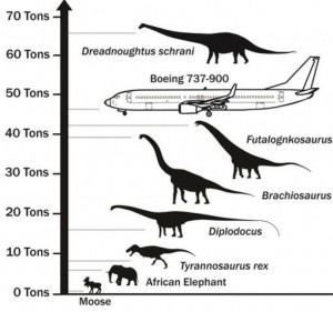 El-descubrimiento-del-dinosaurio-mas-grande-que-ha-caminado-sobre-la-Tierra-3