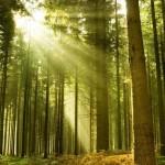 bosque-frondoso