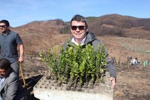 reforest
