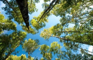 bosque_renoval